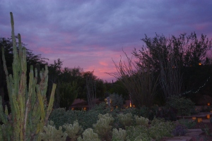 The beginnings of sunset seen from the Desert Wildlife Loop Trail.